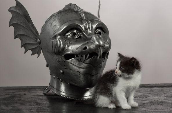Коты викингов были меньше со…