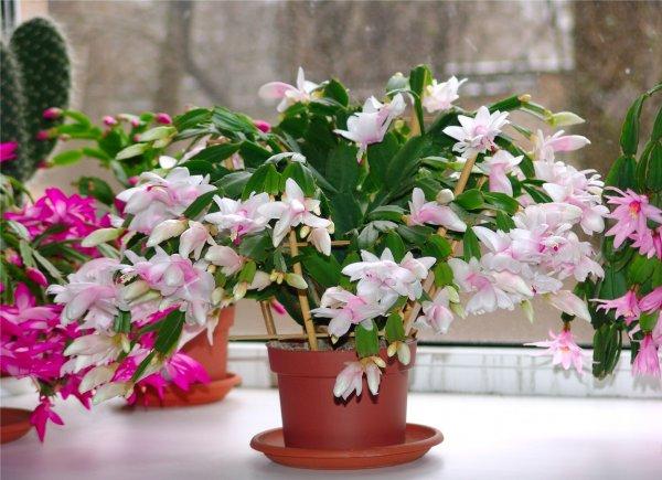 Экзотические комнатные цветы