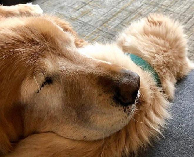 Преданный друг: маленький щенок протянул «лапу» помощи старенькому слепому псу