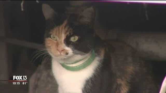 Во Флориде кошка предупредила жильцов дома о начавшемся возгорании