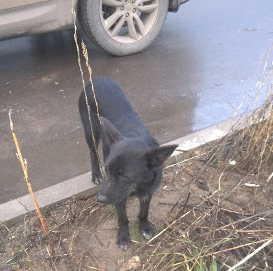 Собака отчаянно звала прохожих на помощь щенка