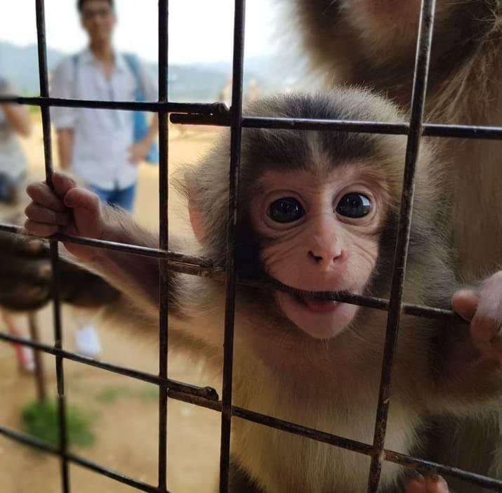 А это странное большеглазое существо только и мечтает вцепиться в вас, как в прутья этой клетки.. животные, мило, фото
