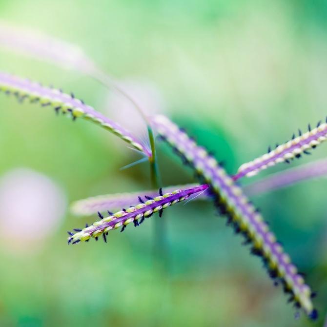 Красивые макрофотографии растений, Andrew Smith