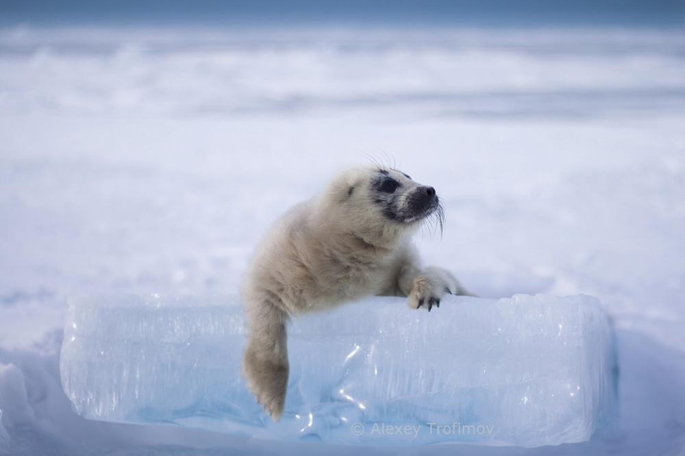 Фотограф потратил 3 года и сделал эти невероятные кадры — малыш на льду Байкала