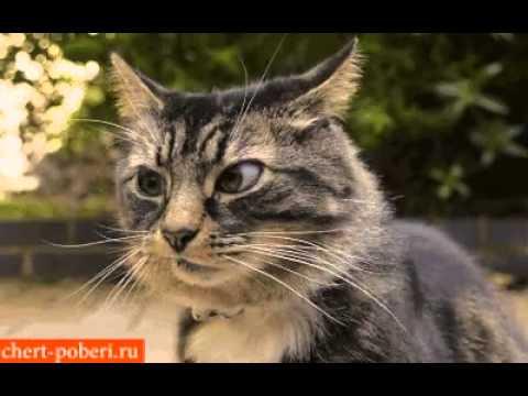 Скромный котик