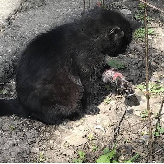 Москва. Кошка с раздавленной лапой на улице. Недавно родила котят. Кто-нибудь может ее спасти?