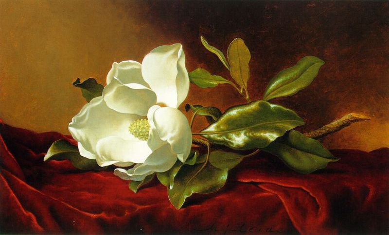 File:Martin Johnson Heade - A Magnolia on Red Velvet ATC.jpg