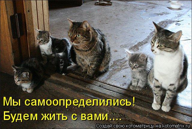 Котоматрица: Мы самоопределились!  Будем жить с вами....