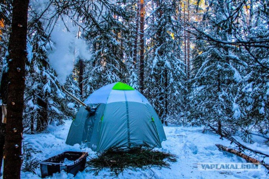 Как в зимнем лесу живется?