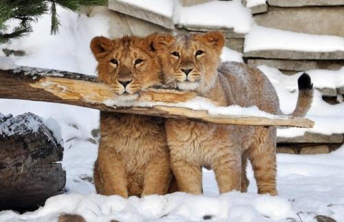 Обитателям зооуголка в Симфе…