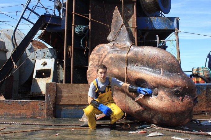 Невероятные монстры: российский моряк публикует снимки самых диковинных существ, попадающих в сети