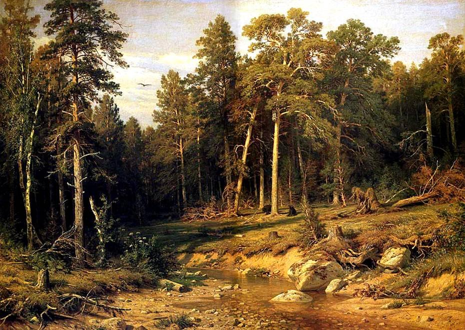 Сосновый бор мачтовый лес в вятской