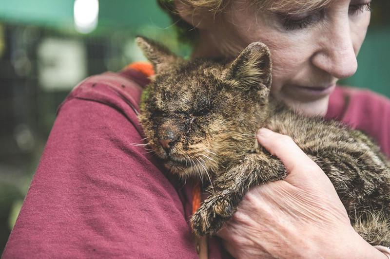 «Крик о помощи». Женщина взяла на руки кота, к которому другие боялись даже подходить