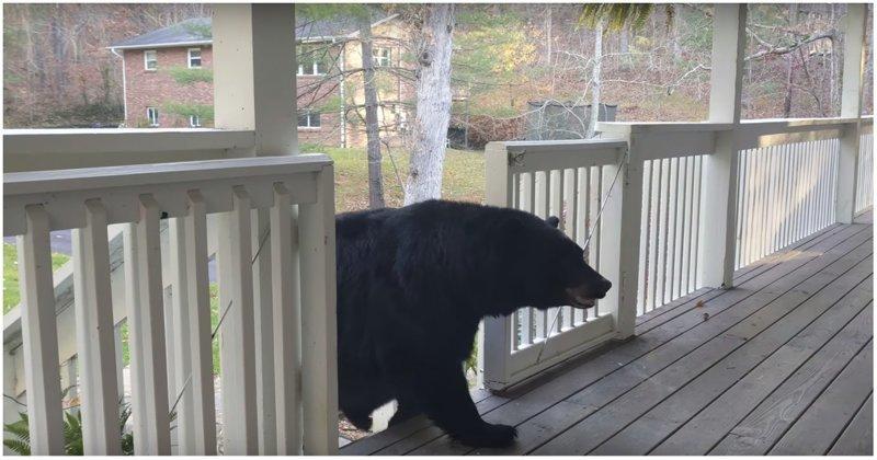 Привет, сосед! Медвежье семейство зашло в гости к жителю США