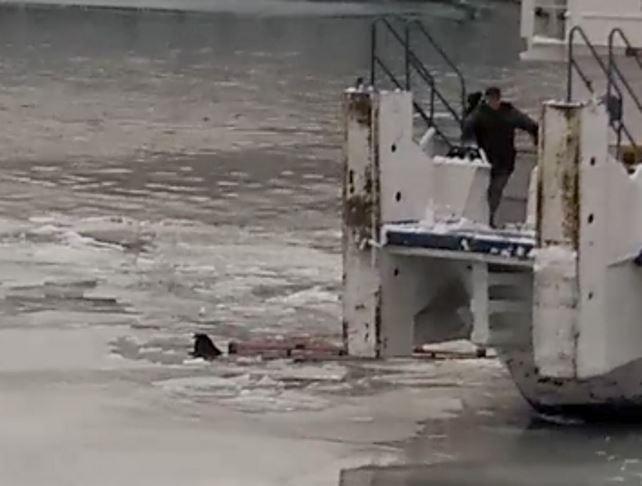 Из Москвы-реки вытащили тонувшую собаку