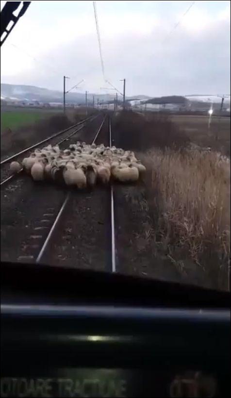 Если поезд не приходит вовремя