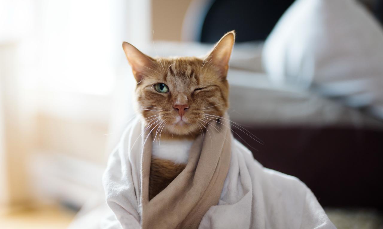 Кошки,котята.Смотрите,улыбайтесь Поднимите себе настроение