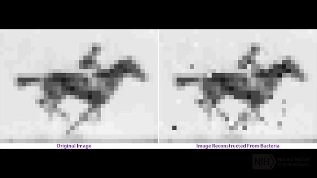 Ученые впервые записали в ДНК мультфильм