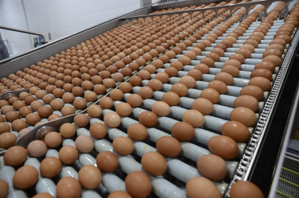 Ленинградская область развивает продовольственный экспорт