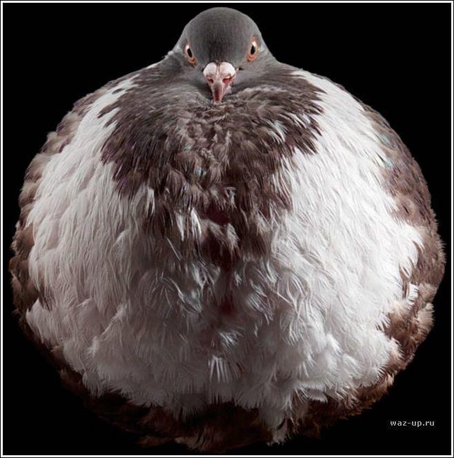 Крутые птахи