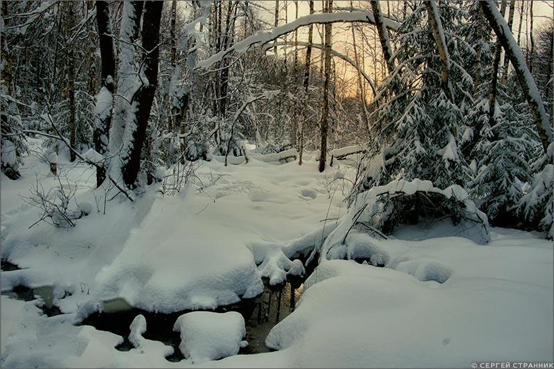 Фото Гжель Болото зимой