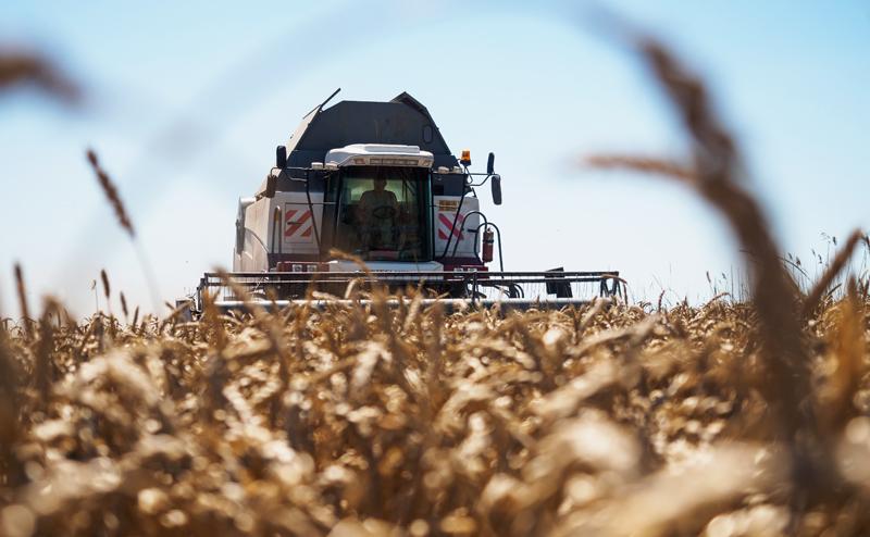 Зерновое проклятие России: Хлеба много, а едим дрянь