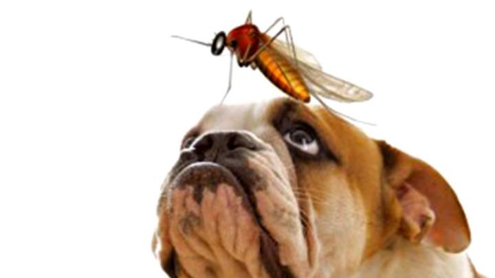 Как защитить собаку от комаров?