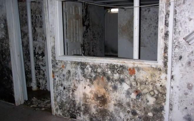 Плесень на стенах: чем опасна и причины появления. Вред для владельцев квартиры или дома