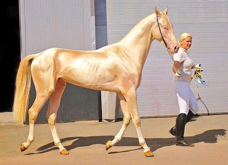 Фотографии лошадей, которые кажутся ненастоящими из-за своей красоты