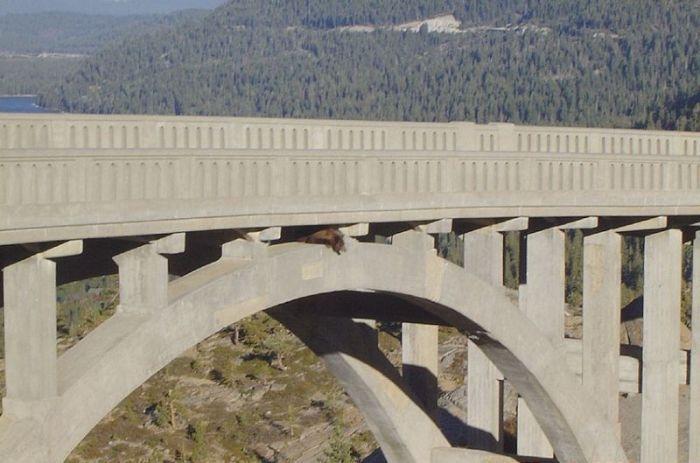 спасение медведя мост, медведь застрял под мостом