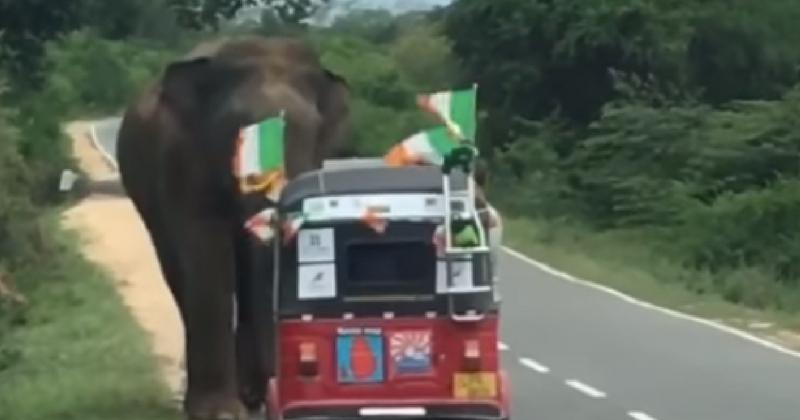 Как нельзя кормить слонов: один случай из тысячи, когда ребятам очень повезло остаться живыми!