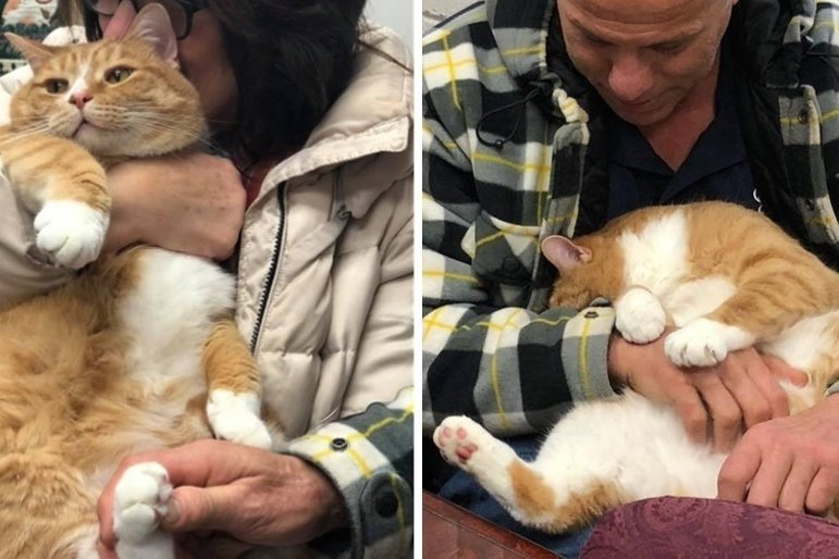 Кота сдали в приют из-за его любви сидеть на коленях хозяина, но ему нашли новую семью