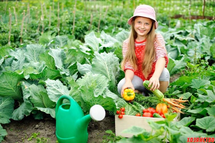 Девять способов защитить урожай от птиц.jpg