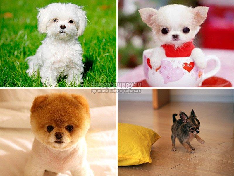 Почему маленькие собаки так агрессивны?