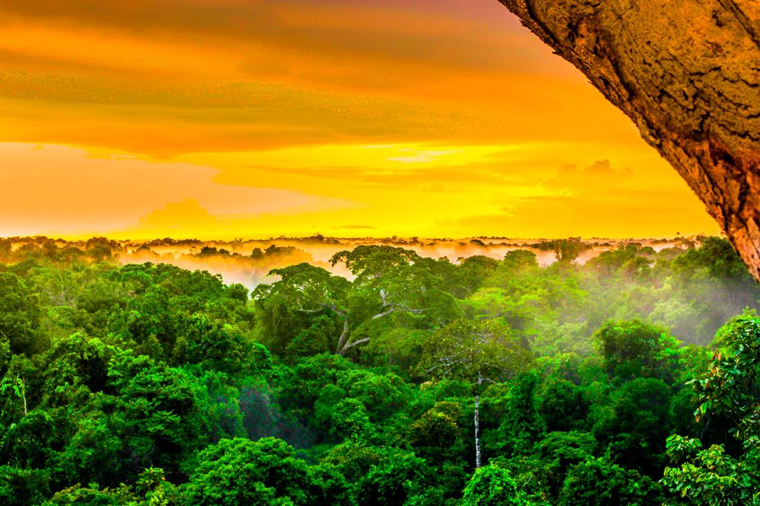 Дождевые леса Амазонии, Бразилия