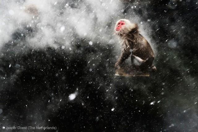 Забавные фото победителей конкурса Wildlife Photographer of the Year (12)