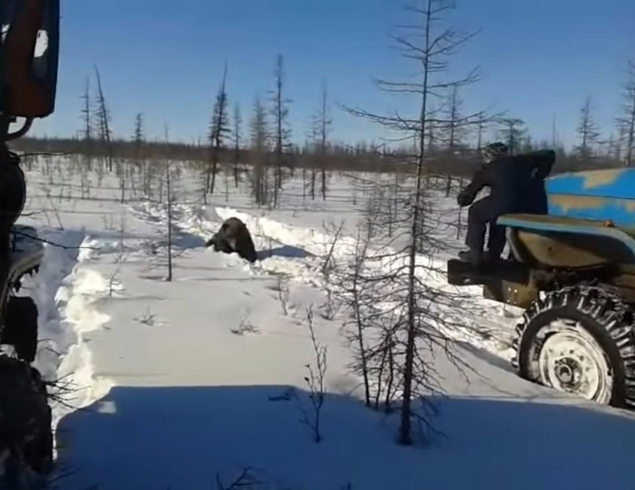 Задавившие медведя вахтовики добивали зверя железным ломом