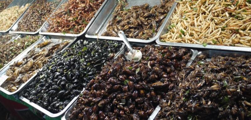 Наши потомки будут есть насекомых