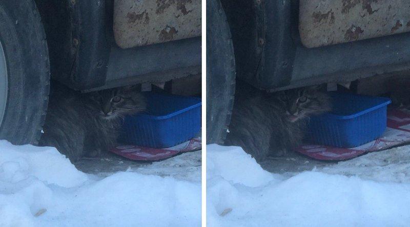 Напуганный кот не желал вылезать из-под груды металлолома