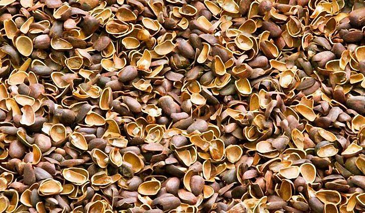 Отвар из скорлупы кедровых орехов