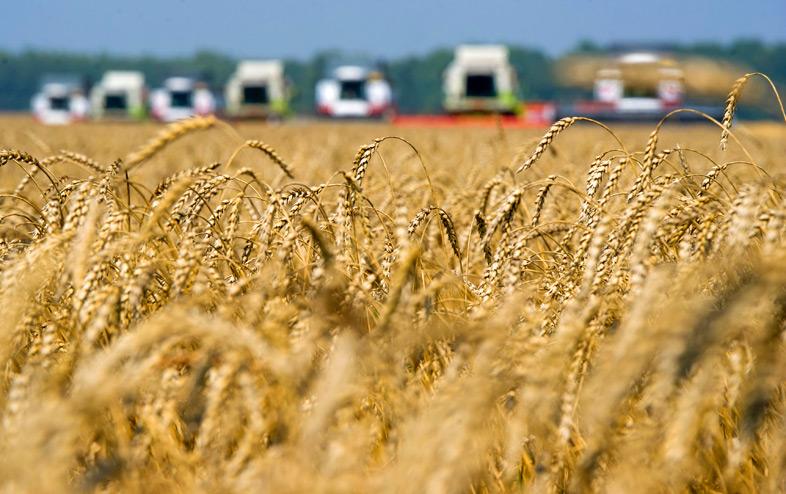 Экспорт зерна из России побил исторический рекорд