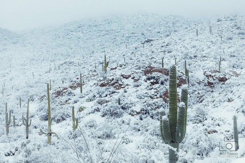 Кактусы в сугробах: в пустыне Аризоны выпал снег
