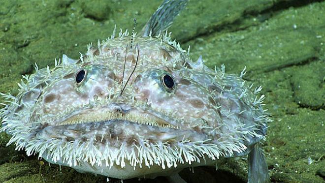Самые странные существа с морского дна