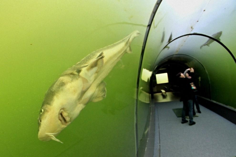 tunnel-Modra-6