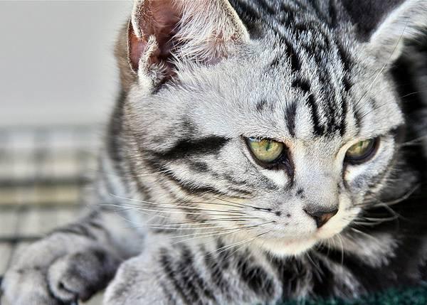 Теплый кот