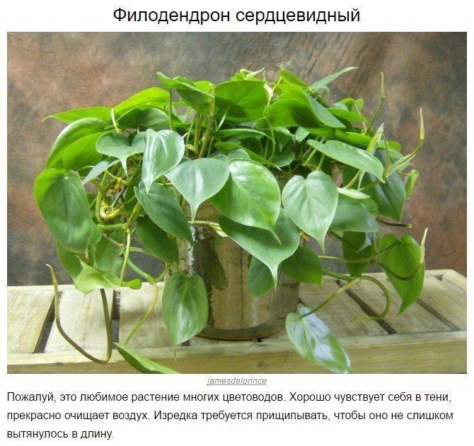 10 домашних растений, которые могут выжить даже в самом темном углу