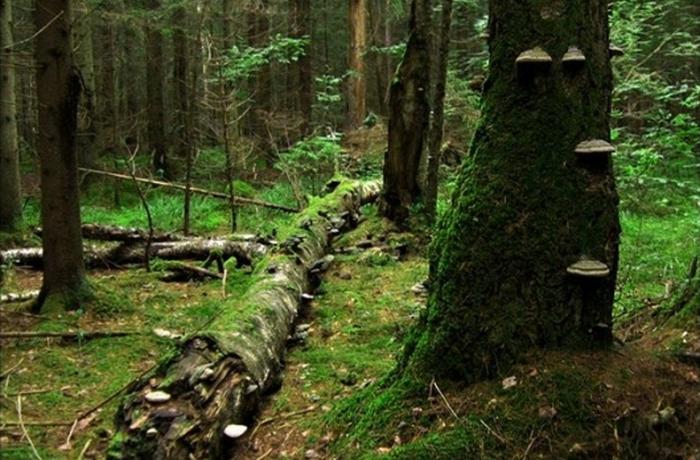 Мончаловский лес