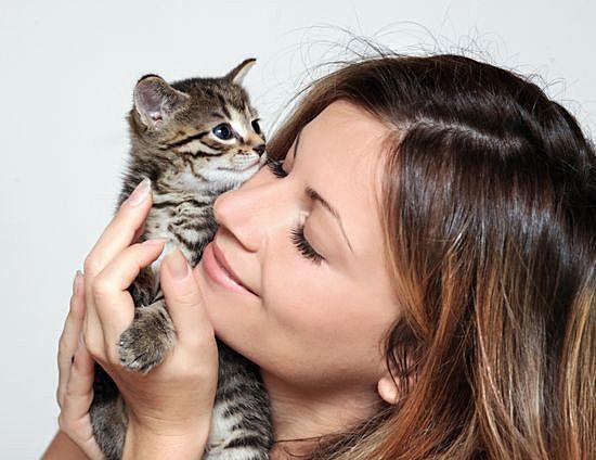 Чем можно заразиться от кошки: мифы и факты.