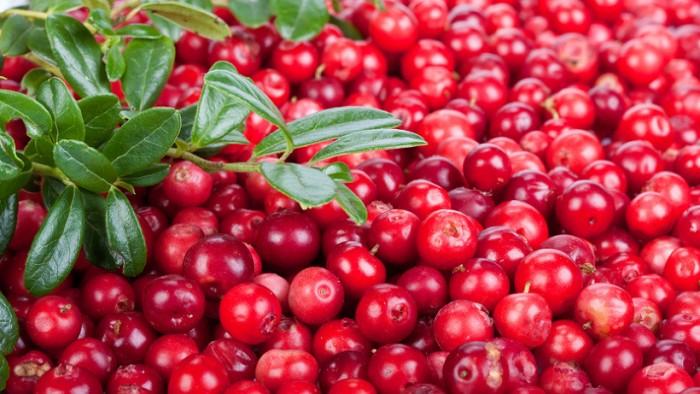 ягоды северные фото