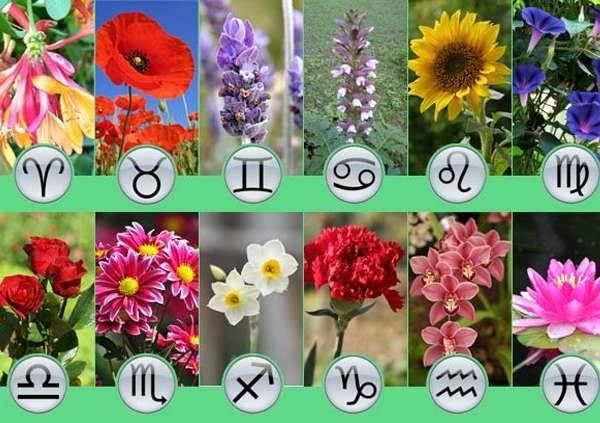 Подбираем цветок - талисман согласно вашему знаку Зодиака